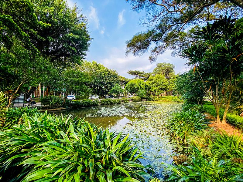 荷花池(Lotus Pond)